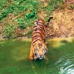 Экологический туризм в Индии